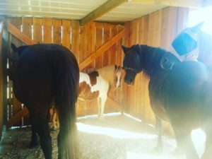 Les 4 chevaux ne se quittent pas!