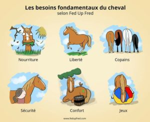 Besoins fondamentaux des chevaux