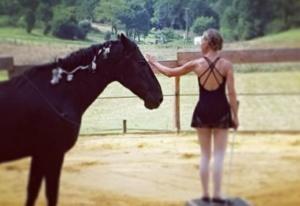 perig'horses paddock paradise