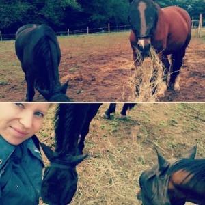 chevaux en gardiennage