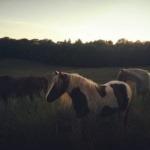 Une soirée à Perig'horses