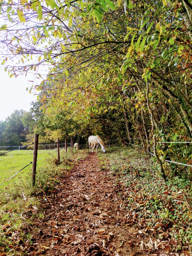 Paddock paradise automne